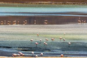 Flamingos in Laguna Hedionda, Potosi Department, Bolivia. by Keren Su