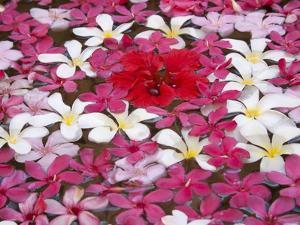 Flower Decoration, Udaipur, Rajasthan, India by Keren Su