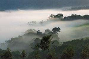 Forest in morning mist, Kibale National Park, Uganda by Keren Su