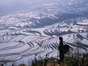 Hani Girl with Rice Terraces, China by Keren Su