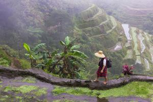 Igorot Woman, Rice Terraces, Agriculture, Philippine Cordilleras, Philippines by Keren Su