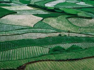 Landscape of Rice Paddies,Guizhou, China by Keren Su