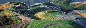 Landscape of Rice Terraces, China by Keren Su