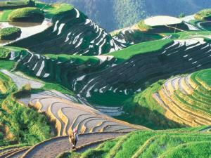 Landscape of Rice Terraces, Guangxi, China by Keren Su