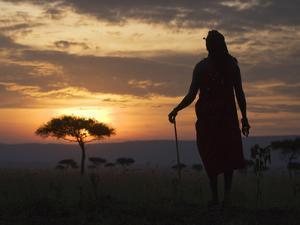 Maasai Tribesman Carrying a Stick on the Savannah at Sunset, Maasai Mara National Reserve, Kenya by Keren Su