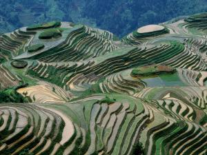 Mountainside Landscape of Rice Terraces, China by Keren Su