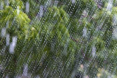 Rain in the Forest, North Rupununi, Southern Guyana by Keren Su