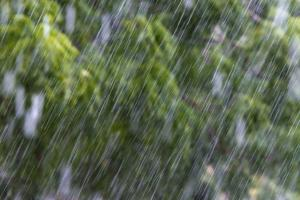 Rain in the Forest, North Rupununi, Southern Guyana by Keren Su
