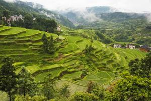Rice paddy in the mountain, Zhaoxing, Guizhou Province, China by Keren Su