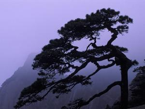 Seeing Off Pine Tree on Mt. Huangshan (Yellow Mountain), China by Keren Su