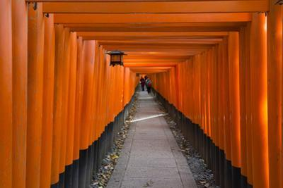 Senbon Torii, thousands of Torii gates, in Fushimi Inari Shrine, Kyoto, Japan by Keren Su