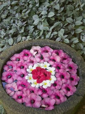 Stone Bowl Filled with Plumeria Blossoms by Keren Su
