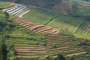 Terraces on Mountain Side, Sindoro-Sumbing Valley, Java, Indonesia by Keren Su