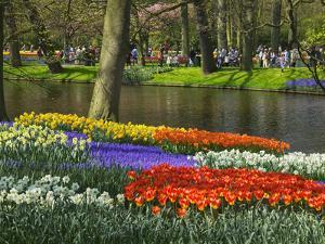 Tulips and Daffodils in Bloom in Keukenhof Gardens, Amsterdam, Netherlands by Keren Su