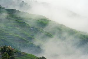 Village with rice terrace in the mountain in morning mist, Jiabang, Guizhou Province, China. by Keren Su