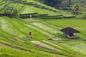 Water-Filled Rice Terraces, Bali Island, Indonesia by Keren Su