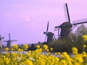 Windmills Along the Canal in Kinderdijk, Netherlands by Keren Su