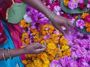 Woman Selling Flower, Pushkar, Rajasthan, India by Keren Su