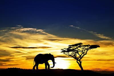 A Lone Elephant Africa