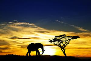 A Lone Elephant Africa by kesipun