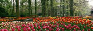 Keukenhof Garden, Lisse, the Netherlands