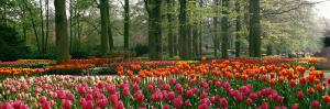 Keukenhof Garden, Lisse, the Netherlands