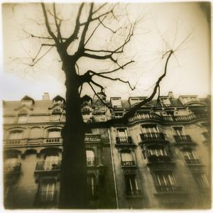Urban Paris Landscape with Tree by Kevin Cruff