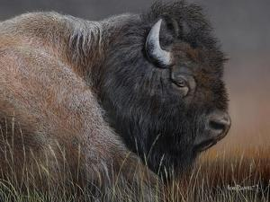 American Icon- Bison by Kevin Daniel
