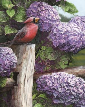 Crimson Splendor by Kevin Daniel