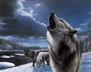 Howling Wolf by Kevin Daniel