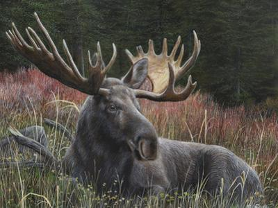 Recumbent Moose by Kevin Daniel