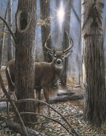 Woodland Sentry by Kevin Daniel
