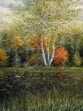 Reflections of Autumn by Kevin Dodds
