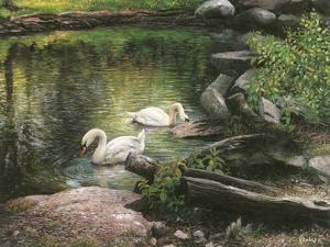 Swan Song by Kevin Dodds