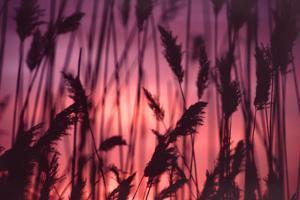 Reeds Close to Tormes River Salamanca Castile Leon Spain by Kevin George