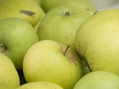 Canada, British Columbia, Cowichan Valley. Close-Up of Green Apples
