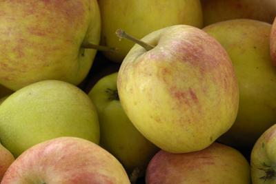 Canada, British Columbia, Cowichan Valley. Close-Up of Red and Green Apples