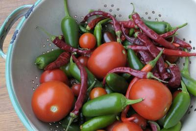 Canada, British Columbia, Cowichan Valley. Tomatoes and Hot Peppers in a Colander