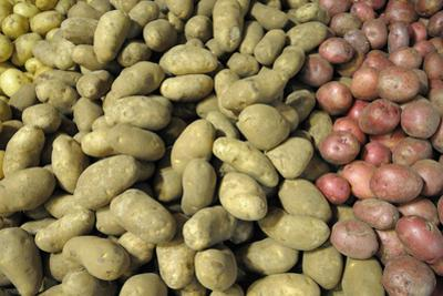 Canada, British Columbia, Cowichan Valley. Yellow and Red Potatoes for Sale at a Market