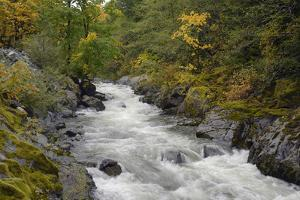 Canada, British Columbia, Vancouver Island. Harris Creek Flowing Through Harris Canyon in Fall by Kevin Oke