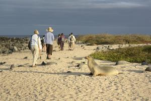 Ecuador, Galapagos, Isabela Island. Galapagos Giant Tortoise by Kevin Oke