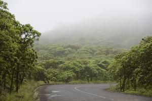 Ecuador, Galapagos, Santa Cruz Island. Forest on the Santa Cruz Road by Kevin Oke