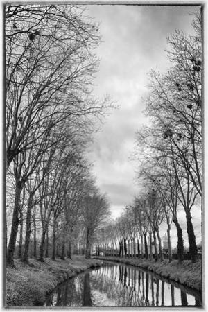 France, Burgundy, Nievre. Trees with Bird Nests on the Nivernais Canal
