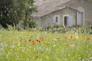 France, Vaucluse, Lourmarin. Wild Poppies in Front of an Old House by Kevin Oke