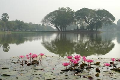 Thailand, Sukhothai. Water Lilies in Front of Wat Traphang Nguen by Kevin Oke