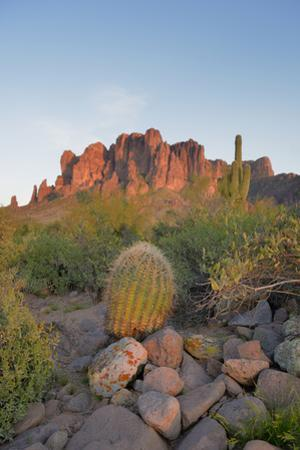 USA, Arizona, Lost Dutchman State Park. Barrel Cactus and Superstition Mountains by Kevin Oke