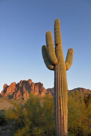 USA, Arizona. Lost Dutchman State Park, Saguaro Cactus and Superstition Mountains by Kevin Oke