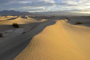 USA, California, Death Valley, Mesquite Flat Sand Dunes at sunrise. by Kevin Oke