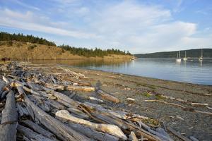 USA, Washington State, San Juan Islands, Lopez Island, Driftwood along a beach by Kevin Oke