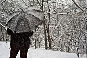 A Man Walks under an Umbrella Below Snow Laden Trees in Central Park by Kike Calvo